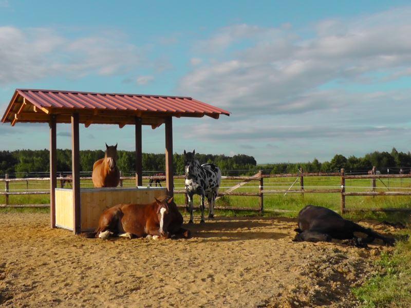 Interview mit offenstall expertin tanja romanazzi for Boden heuraufe pferd