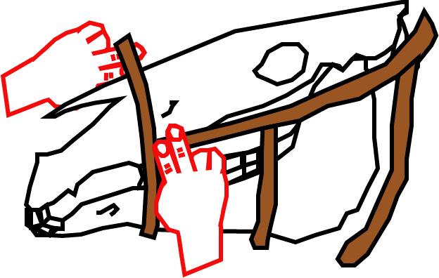 2 Finger breit unter dem Jochbein und 2 Finger Luft lassen - so sitzt der Riemen richtig!